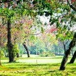 クルンカビーゴルフコース
