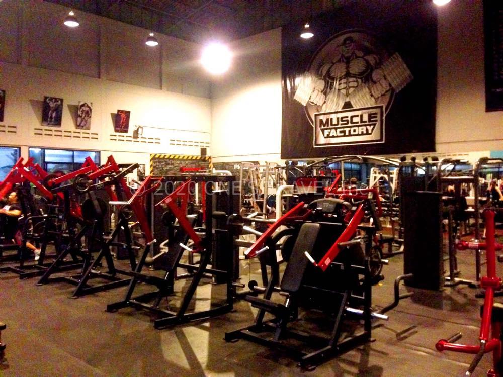 マッスルファクトリー(Muscle Factory)